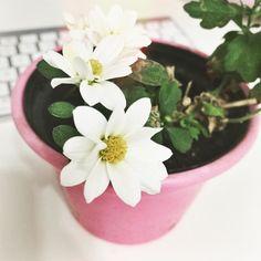Chego em casa depois de uma semana fora e descubro que temos flores novas!  Quão maravilhosa é a natureza?