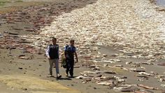 More mass animal die-offs are sparking questions about the possible effects of Fukushima.