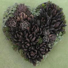 Beautiful Succulent Valentine by Linda Estrin Floral Arts