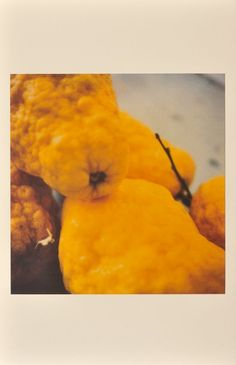 Time Regained: Cy Twombly Photographer and Guest Artists —  Lemons, Gaeta, 2005 © Cy Twombly. Print Richard Cook.