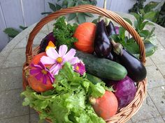 """Normally you don't think of """"high yield crops"""" when gardening. But one of the foundations of permaculture gardening is maximizing your yields. Fruit Plants, Cool Plants, Cash Crop, Low Light Plants, Crop Rotation, Growing Veggies, Herb Seeds, Different Plants, Annual Plants"""