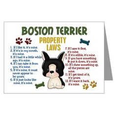 Boston Terrier christmas card Boston Terrier puppy Dog | Greeting ...