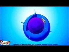 Animal Cell Structure -Educational video for kids