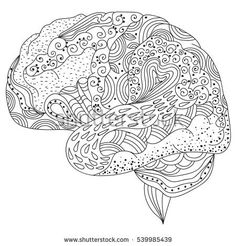 Brain coloring and drawing page for kids human brain coloring human brain doodle decorative curves creative mind learning and design adult coloring book ccuart Gallery