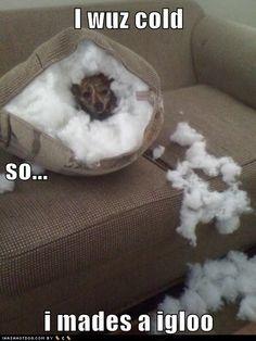 I wuz cold so i mades a igloo