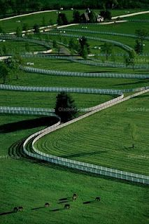 """Pastures with """"riding lanes"""" in between. That is so cool but I have a feeling some of the paddock horses would go insane. lol"""