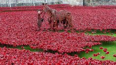 The War Horse amongst the poppies at the Tower of London