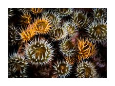 Ocean Jewels Sea Floor, Marine Reserves, Thing 1, Water Life, Limited Edition Prints, Beautiful Flowers, Ocean, Jewels, Fine Art