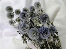 NATURAL BLUE AIR DRIED GLOBE THISTLE ECHINOPS FLOWERS