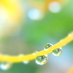 maru @marumaru.yz #rain#drop#instap...Instagram photo | Websta (Webstagram)