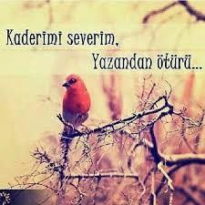 Kaderini Sev belkide seninki en iyisidir.. Positive Words, Islam, Positivity, Quotes, Animals, Instagram, Istanbul, Advice, Profile