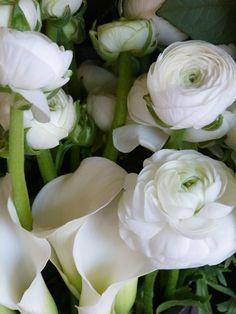 Bloemen Flo