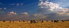 Elephants von Michael H. Voß