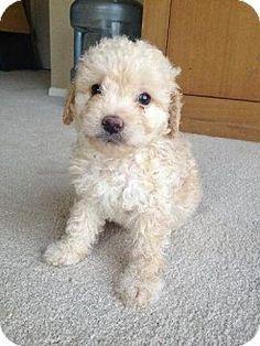 squee so cute
