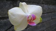 My 💐 Rose, Flowers, Plants, Photography, Pink, Photograph, Florals, Fotografie, Photo Shoot