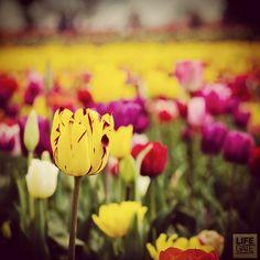 Un viaggio verso alcuni dei giardini più preziosi d'Italia, censiti da Grandi Giardini Italiani. Preziosi perché fioriti, perché capaci di donare colori e suggestioni. Perché meno conosciuti, ma facilmente raggiungibili. Con una buona guida. http://lifeg.at/13cSvGm