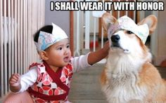 Funny animal captions, animal pictures with captions, lol animals Animal Captions, Funny Captions, Funny Memes, Funny Videos, Funny Animal Pictures, Funny Animals, Cute Animals, Animal Pics, Dog Pictures