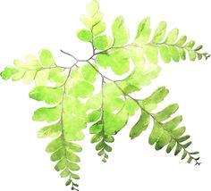 watercolor ferns - Google Search