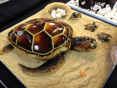 The winning cake from Cake Int'l Manchester - 'Bella the Turtle' made by Vicky Smith