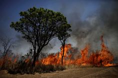 Brazil's Worst Month Ever for Forest Fires Blamed on Human Activity | Climate Central  View of the devastation caused by a forest fire in front of Brasilia's National Park, in Brasilia, Brazil, September 19, 2017.  Credit: REUTERS/Ueslei Marcelino