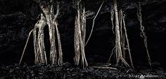 cavern roots