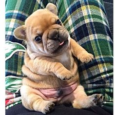 Chubby nugget