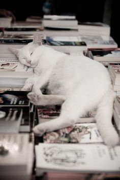 White kitty on white books. I think cats know where they look particularly attractive and settle there
