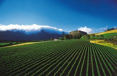 Mont Rochelle Hotel and Mountain Vineyards, Cape Winelands, Franschhoek - South Africa Safari Provinces Of South Africa, South Africa Safari, South African Wine, Dream City, Day Tours, Cape Town, Beautiful Places, Wonderful Places, Vineyard