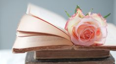 Wallpaper Download 5120x2880 Pink rose on the book tabs - Romantic image. Love Wallappers. download beautiful HD Wallpaper 1080p 2160p UHD 4K HD, for IOS devices