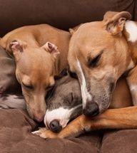 Ookka, Miki and Hero by marsula on Flickr...sleeping beauties
