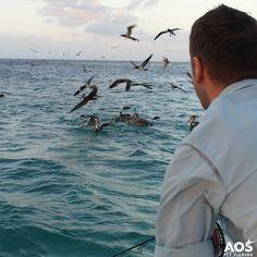 No escape! Tarpon & Birds are chasing bait fish! #aosfishing #flyfishingmakesyouhappy #flyfishing #fliegenfischen #pescamosca #fluefiske #graz #styria #steiermark #austria #onlineshop #picoftheday #photooftheday #lovefishing #catchoftheday #catchandrelease #onthefly #saltwater #saltlife #onthefly #tarpon #birds #pelican @aosfishing