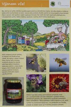 Den Země - včely, projekt Člověk a jeho svět (CZ.1.07/1.1.32/01.0034) - ZŠ Jesenice, okr. Rakovník Sudoku, Planting For Kids, Preschool Graduation, Indoor Activities For Kids, Bugs And Insects, Science And Nature, Spring Time, Montessori, Homeschool