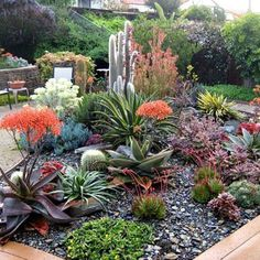 5 Succulent Landscaping Ideas recipe on Food52 Succulent Rock Garden, Succulent Landscaping, Succulent Gardening, Succulents Garden, Succulent Garden Ideas, Low Water Landscaping, Landscaping With Rocks, Front Yard Landscaping, Tropical Backyard Landscaping