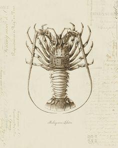 Vintage Madagascar Lobster on French Ephemera by OrangeClipart,