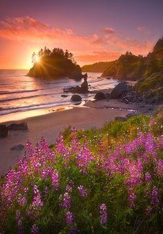 Coastal Northern California - take me there, stat!