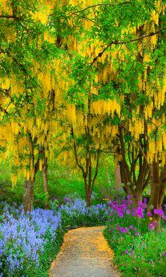 ♥••wisteria path••♥