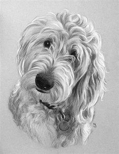 "Daily Paintworks - ""Taffy"" - Original Fine Art for Sale - © Rita Kirkman Animal Sketches, Animal Drawings, Art Sketches, Art Drawings, Goldendoodle Art, Goldendoodles, Labradoodles, Illustrations, Illustration Art"