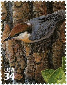 34c Brown-headed Nuthatch Stamp from the US