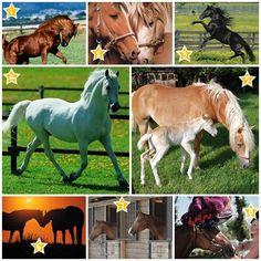 Personality Test: Which of these horses you like best? http://veu.sk/index.php/aktuality/1784-test-osobnosti-ktory-z-tychto-koni-sa-vam-najviac-paci.html #personality #test #which #horses #like #best