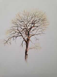 What a lovely winter tree in coloured pencils. Find out what techniques Rob uses to achieve this NOW on ArtTutor