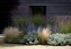 Cortaderas y plantas violetas