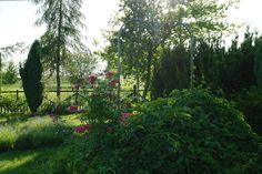 """Sąsiadująca z tym ogrodem łąka """"wchodzi"""" do ogrodu dzięki ogrodzeniu, które jest ażurowe i nie przesłonięte żywopłotem. Tak osiągnięta perspektywa sprawia, że ogród wydaje się być większy. Projekt: Joanna Paszko Ochotny Homestyling"""