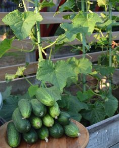 Allotment Gardening, Container Gardening, Gardening Tips, Garden Spells, Green Farm, Grow Your Own Food, Grow Food, Types Of Fruit, Growing Gardens