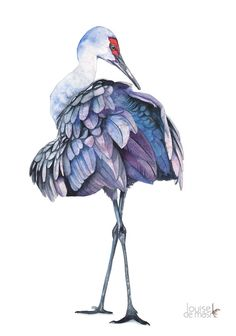 Sandhill Crane watercolour painting, ORIGINAL watercolor painting, Sandhill…