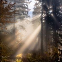 Streiflicht im Nebelwald | by g-e-o-m-i | http://ift.tt/2aThV6t