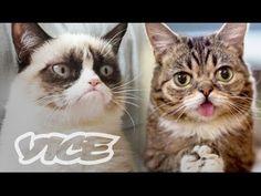 Lil Bub & Friendz (Part the best thing ever Jackson Galaxy, Grumpy Cat, Cat Lady, Cute Cats, Little Girls, Humor, Pets, Google Search, Animals
