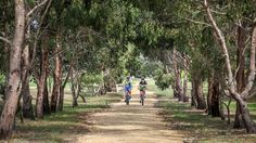 Cycle between Stratford and Traralgon on a high quality track, passing through lush dairy country with views of the Great Dividing Range. Victoria Australia, Lush, Trip Advisor, Attraction, Need To Know, Things To Do, Trail, Country Roads, Photos
