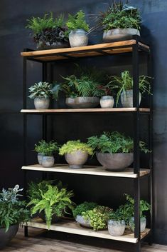 Parksdale Acacia Wood and Metal Frame Shelf - Moss Manor Room With Plants, House Plants Decor, Plant Decor, Wood And Metal Shelves, Wood Shelving Units, Shelving Ideas, Indoor Garden, Indoor Plants, Hanging Plants