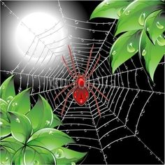 Ragno su Ragnatela-Spider on Web-Vector © bluedarkat #23971262