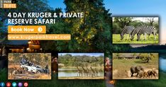 4 Day Kruger And Private Reserve Safari With Very Lowest Prices. Enquiry & More Information, Visit at http://bit.ly/2GpLkIK